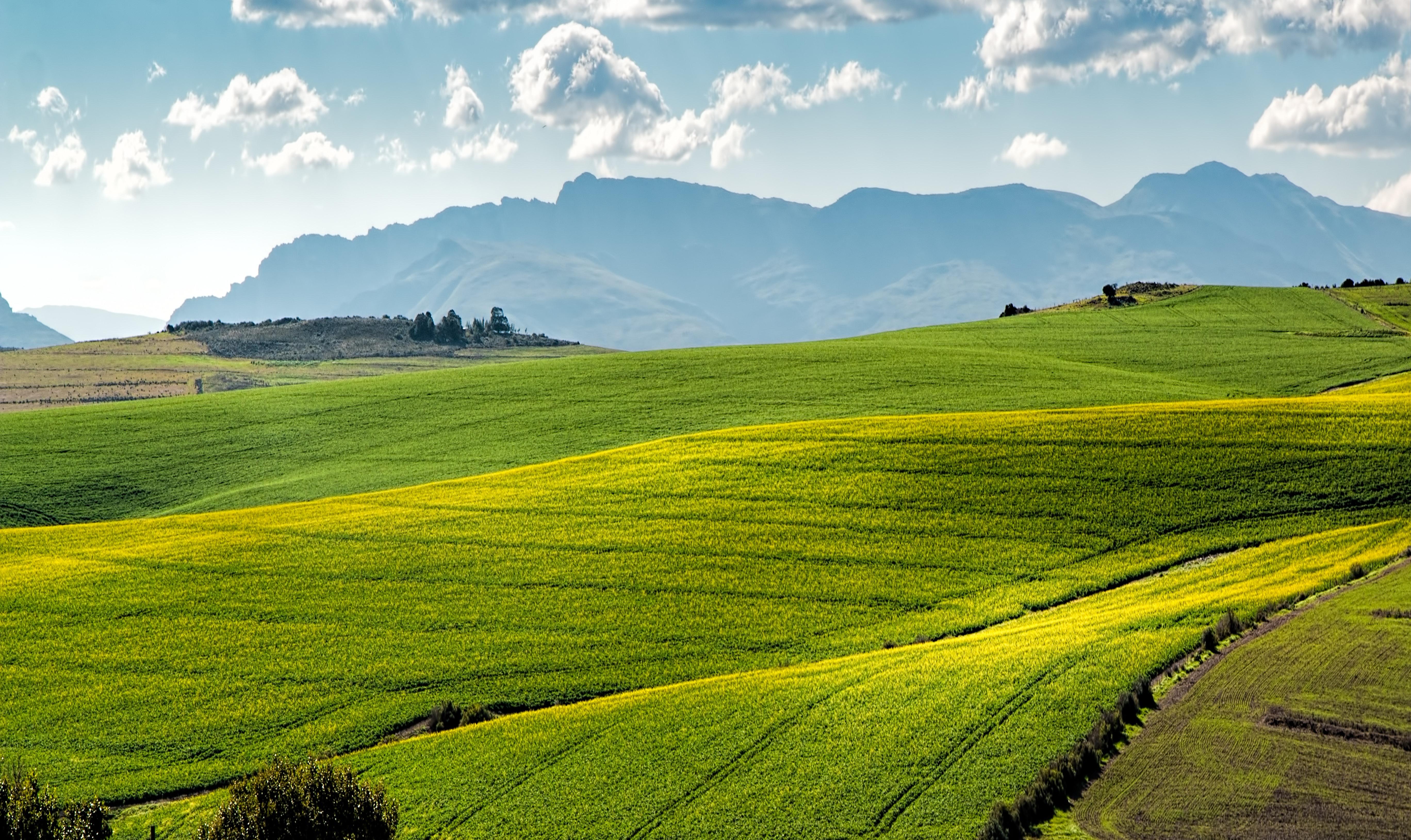 crop-cropland-environment-259280